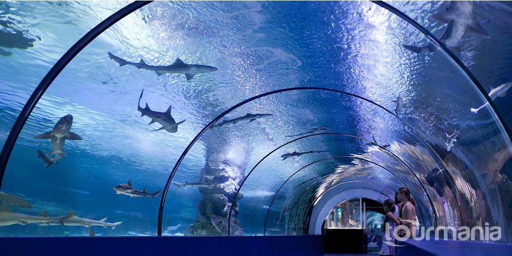 Antalya Aquarium Daily Tour from Kemer