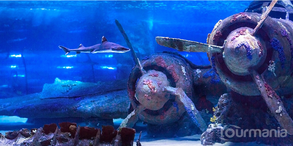 Antalya Aquarium Daily Tour from Side