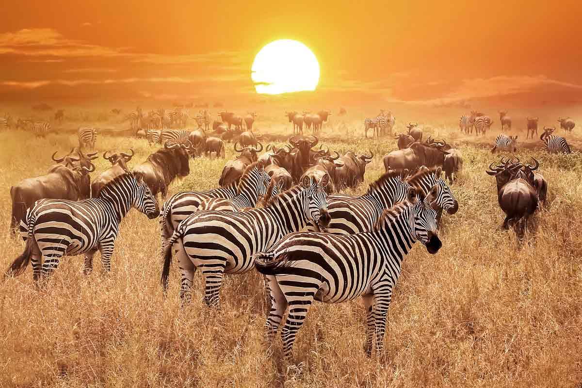 Kenya'da Safari Zanzibar'da Okyanus