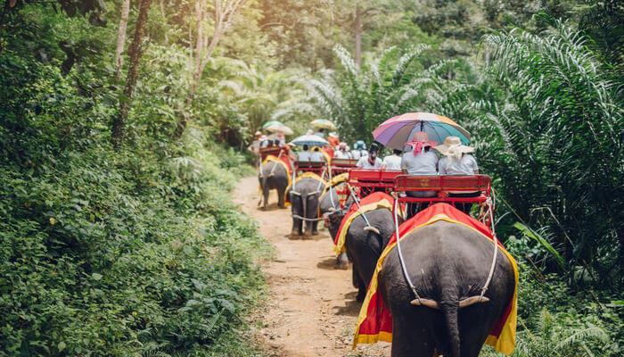 Phuket Elaphant Trekking