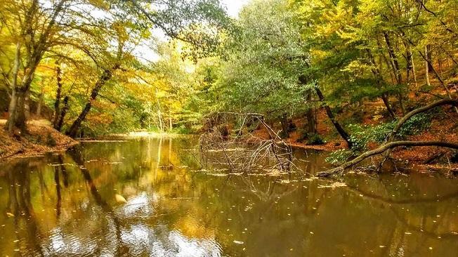 Belgrad Ormanları Doğa Yürüyüşü - Bentler Tabiat Parkı Gezisi