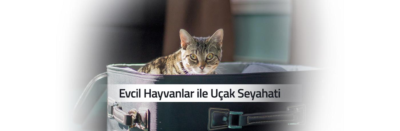 Evcil Hayvanlar ile Uçak Seyahati