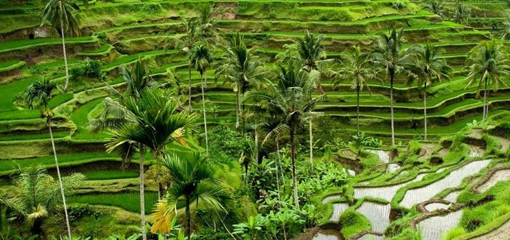 Bali_Deniz_Udub_Kultur