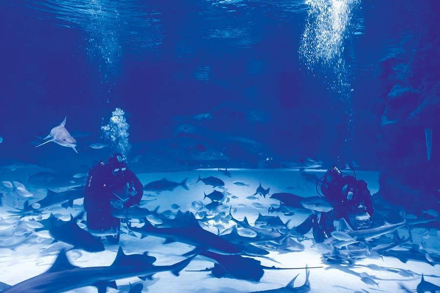 Aquarium & XD Cinema Plus